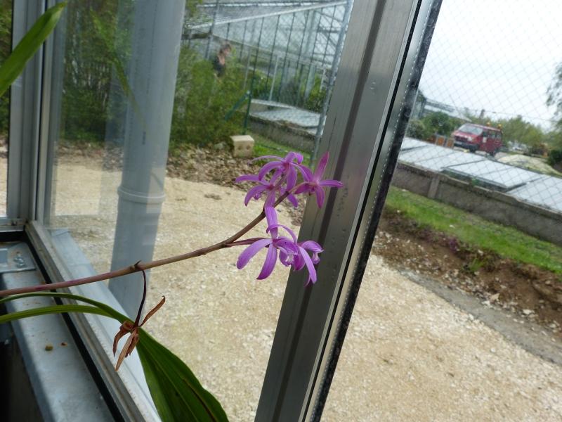 Besuch bei MSB Orchideen in Schwabach 043gaugb