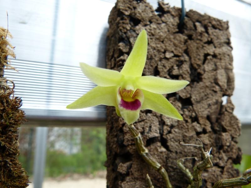 Besuch bei MSB Orchideen in Schwabach 044juu2o