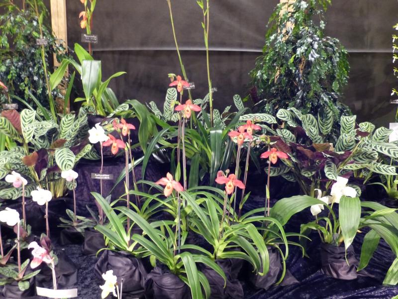 Neu-Ulmer Orchideentage 07.02.-09.02.2014   045nrji1
