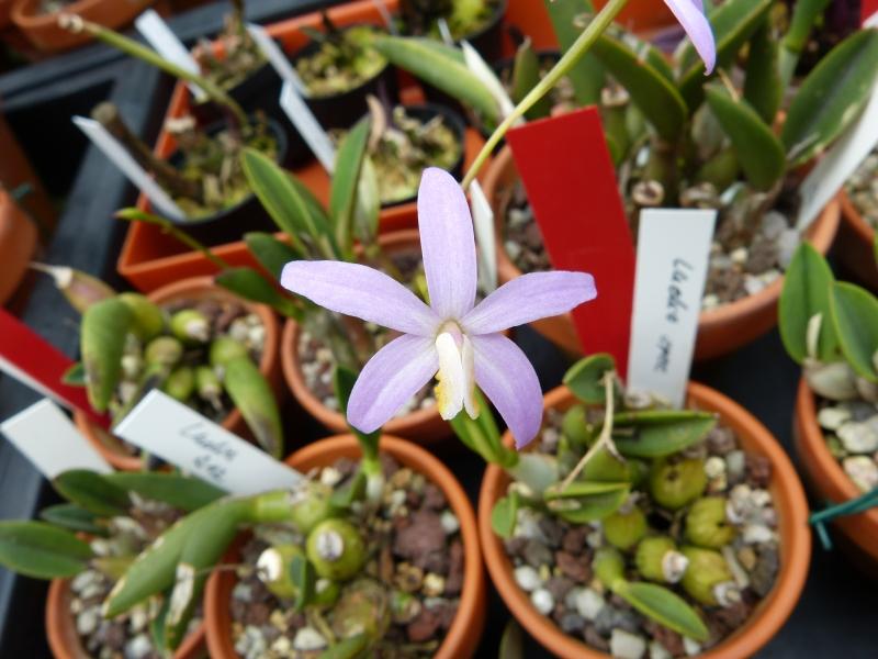 Besuch bei MSB Orchideen in Schwabach 045nsu2l