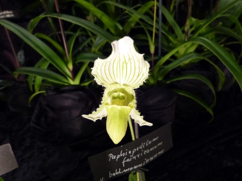 Neu-Ulmer Orchideentage 07.02.-09.02.2014   046ehjda