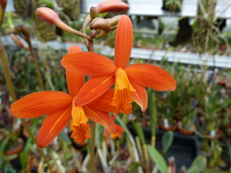 Besuch bei MSB Orchideen in Schwabach 046wduoi
