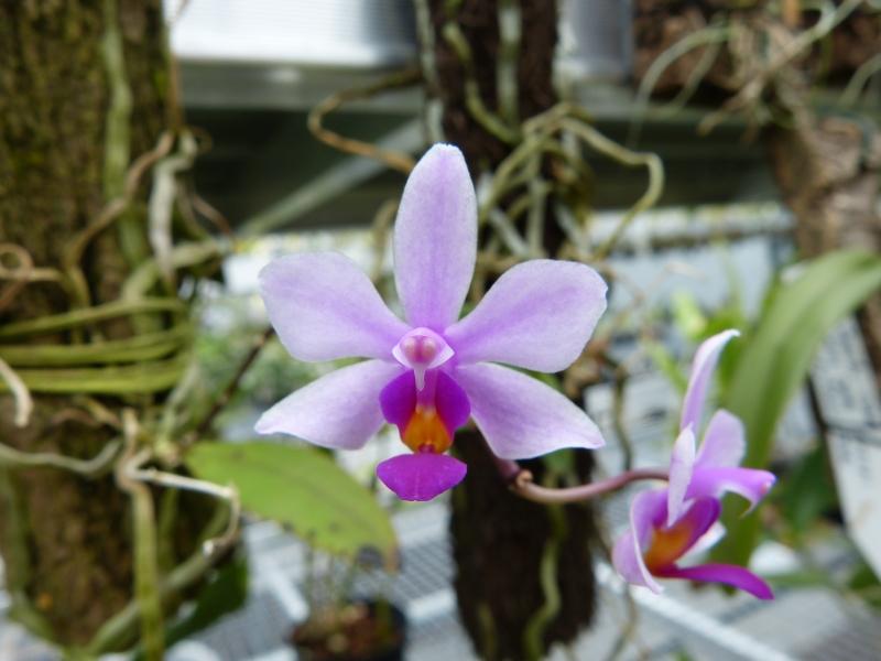 Besuch bei MSB Orchideen in Schwabach 047jjuu1