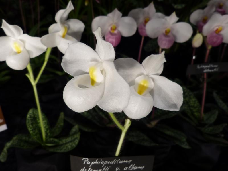 Neu-Ulmer Orchideentage 07.02.-09.02.2014   047l1j4p