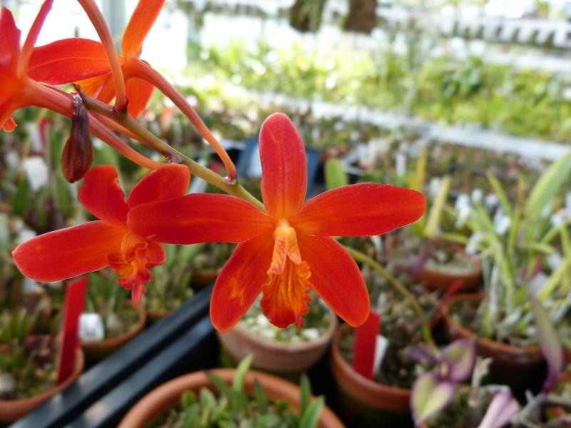 Ich war in Schwabach bei MSB Orchideen 0487xs73