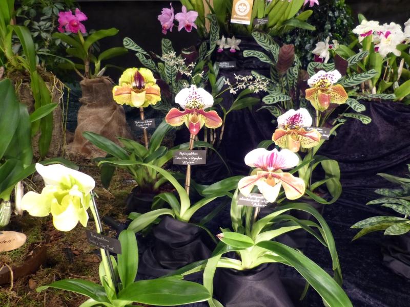 Neu-Ulmer Orchideentage 07.02.-09.02.2014   048jcjcg