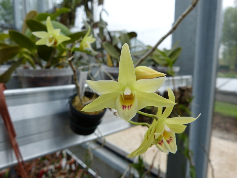 Besuch bei MSB Orchideen in Schwabach 048wluuo