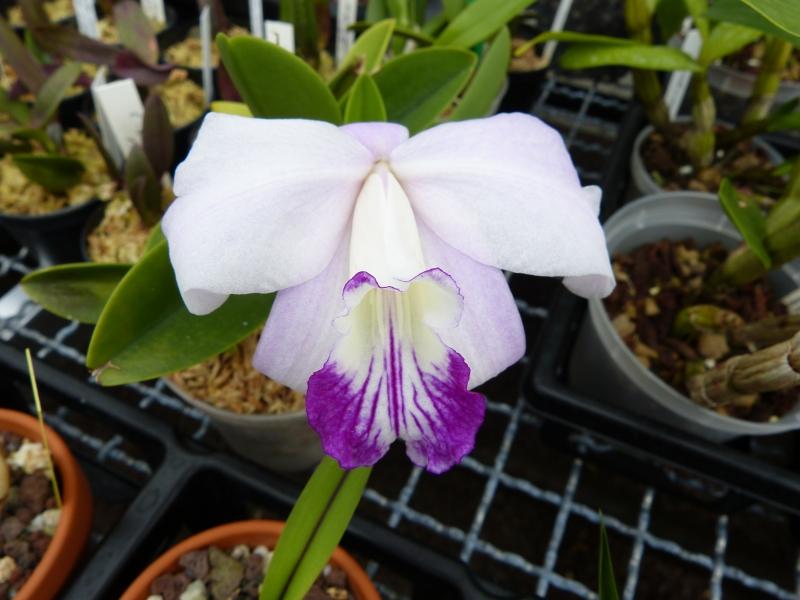Besuch bei MSB Orchideen in Schwabach 049xju8t