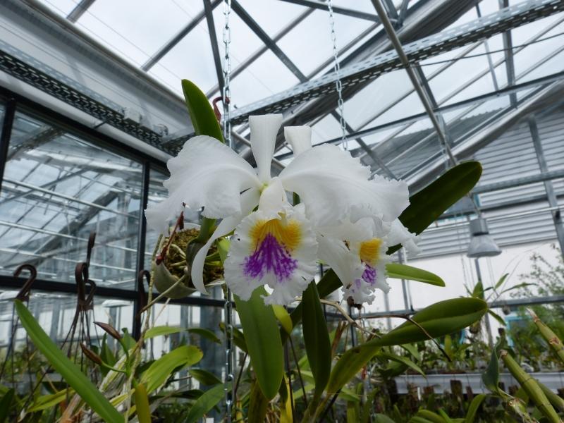 Besuch bei MSB Orchideen in Schwabach 050ttu2l