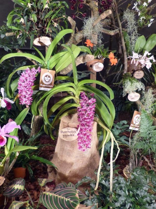 Neu-Ulmer Orchideentage 07.02.-09.02.2014   0511ajdd