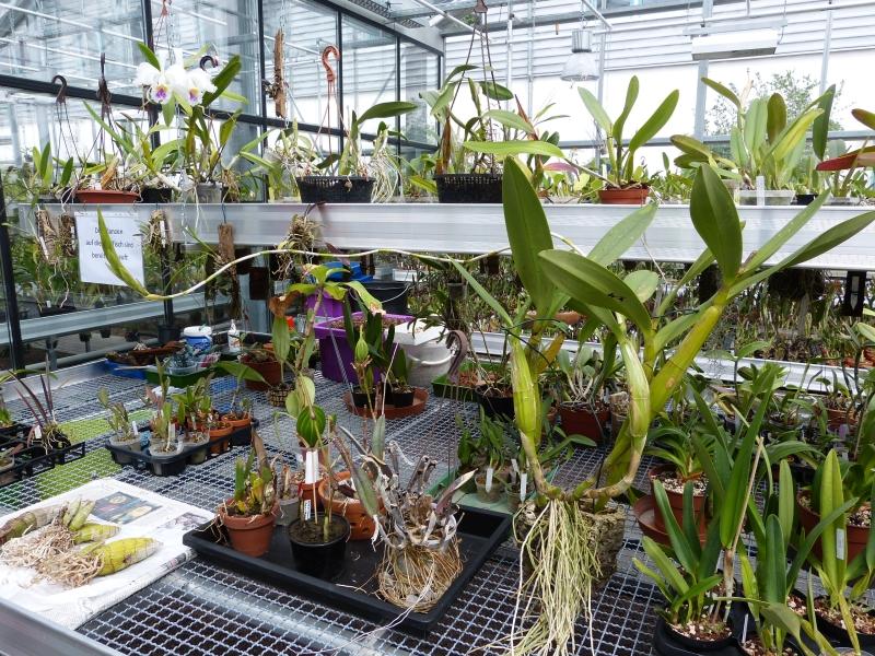 Besuch bei MSB Orchideen in Schwabach 051wxufz