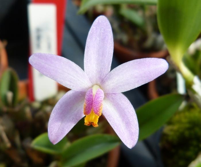 Ich war in Schwabach bei MSB Orchideen 051zhsqt