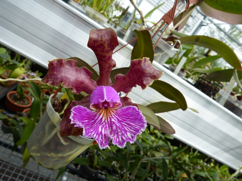 Besuch bei MSB Orchideen in Schwabach 053tbuby
