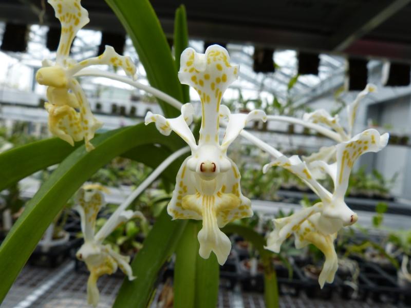 Besuch bei MSB Orchideen in Schwabach 054v2urj