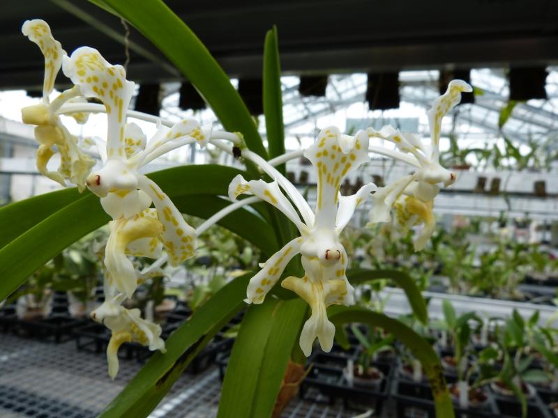 Besuch bei MSB Orchideen in Schwabach 055qmu7q