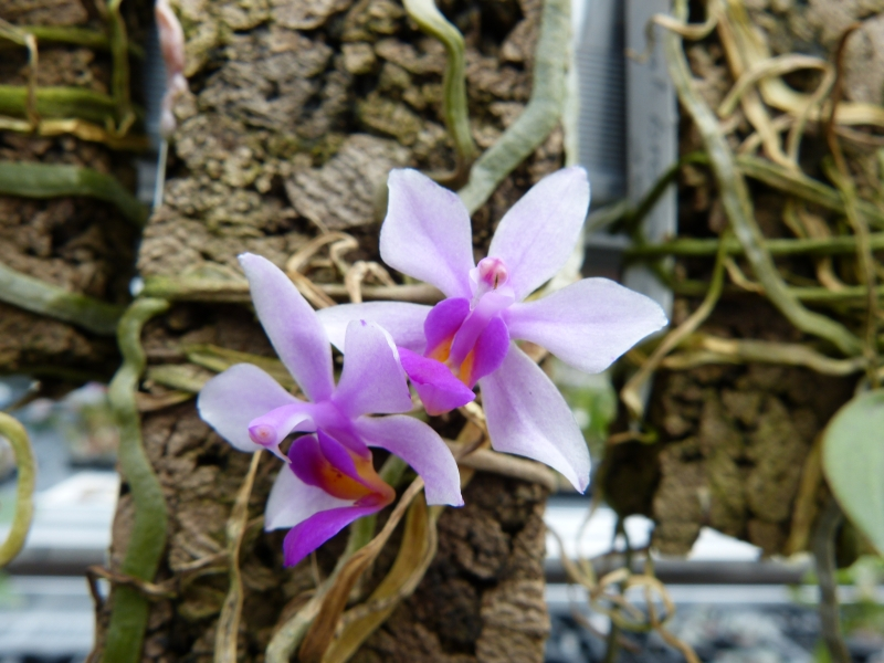 Besuch bei MSB Orchideen in Schwabach 056rvuin
