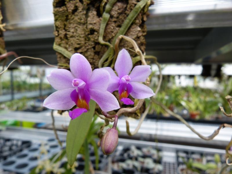 Besuch bei MSB Orchideen in Schwabach 0570du4w