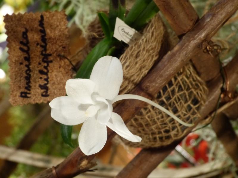 Neu-Ulmer Orchideentage 07.02.-09.02.2014   057fhjx5