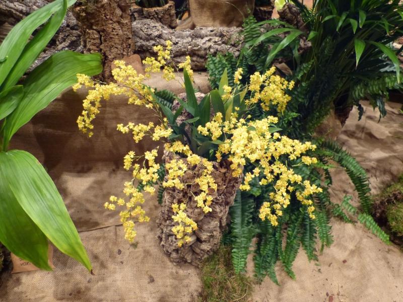 Neu-Ulmer Orchideentage 07.02.-09.02.2014   058gija2