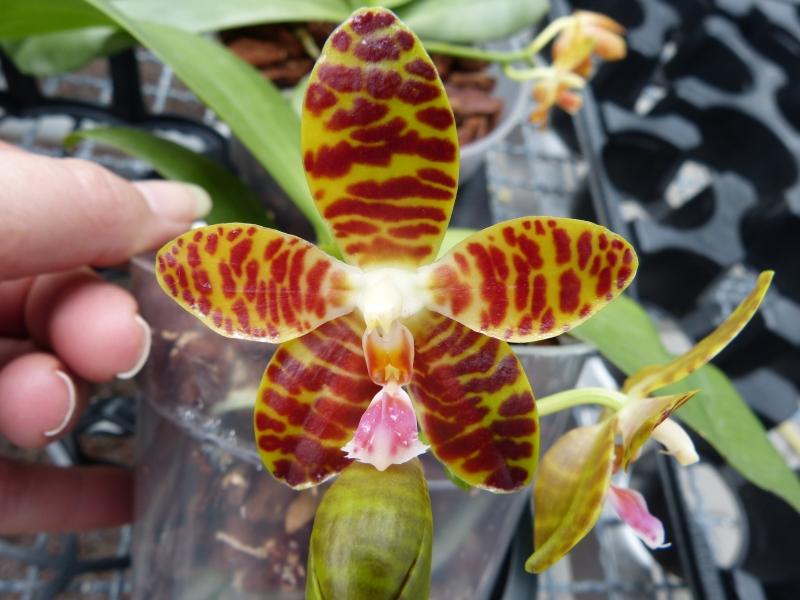 Besuch bei MSB Orchideen in Schwabach 058j7u9n