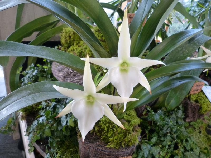 Neu-Ulmer Orchideentage 07.02.-09.02.2014   059yqjxy