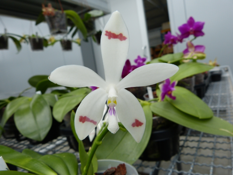 Besuch bei MSB Orchideen in Schwabach 060oxuzg
