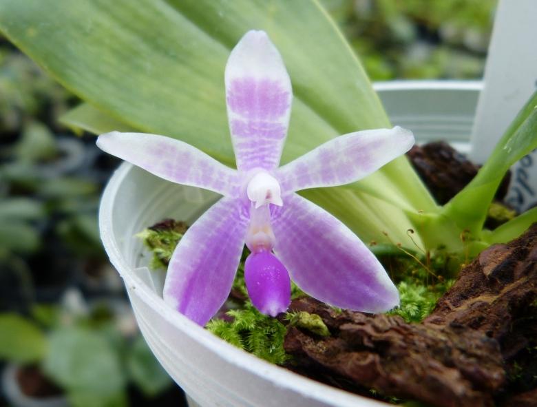 Ich war in Schwabach bei MSB Orchideen 060uvshi