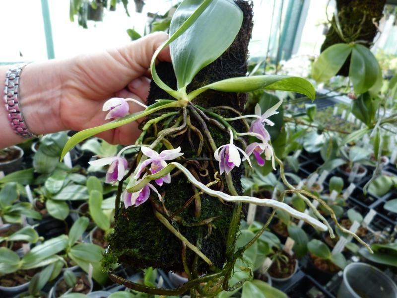 Ich war in Schwabach bei MSB Orchideen 061dysqq