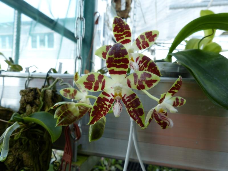 Ich war in Schwabach bei MSB Orchideen 062o7sxu