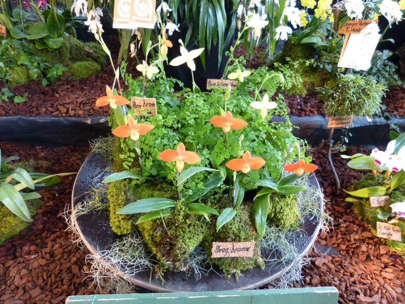 Neu-Ulmer Orchideentage 07.02.-09.02.2014   063hdkbv