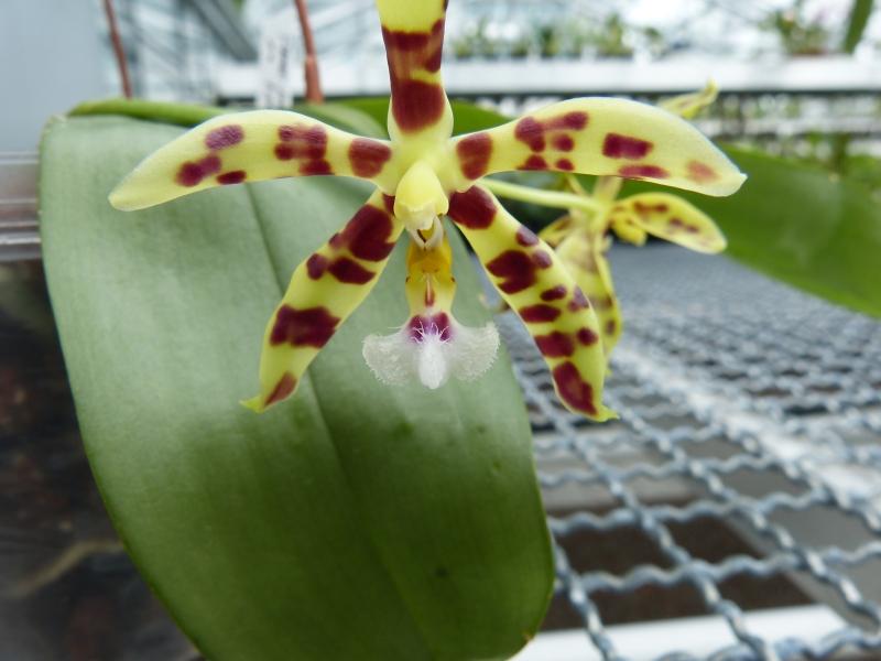 Besuch bei MSB Orchideen in Schwabach 064v9uv9