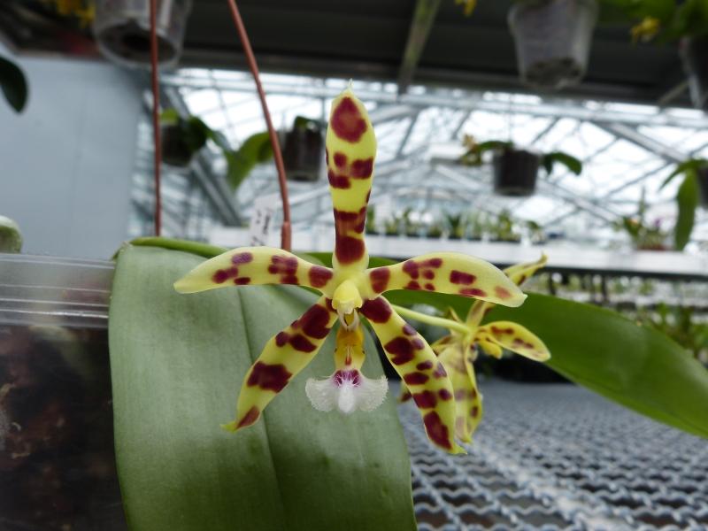 Besuch bei MSB Orchideen in Schwabach 065gsuut