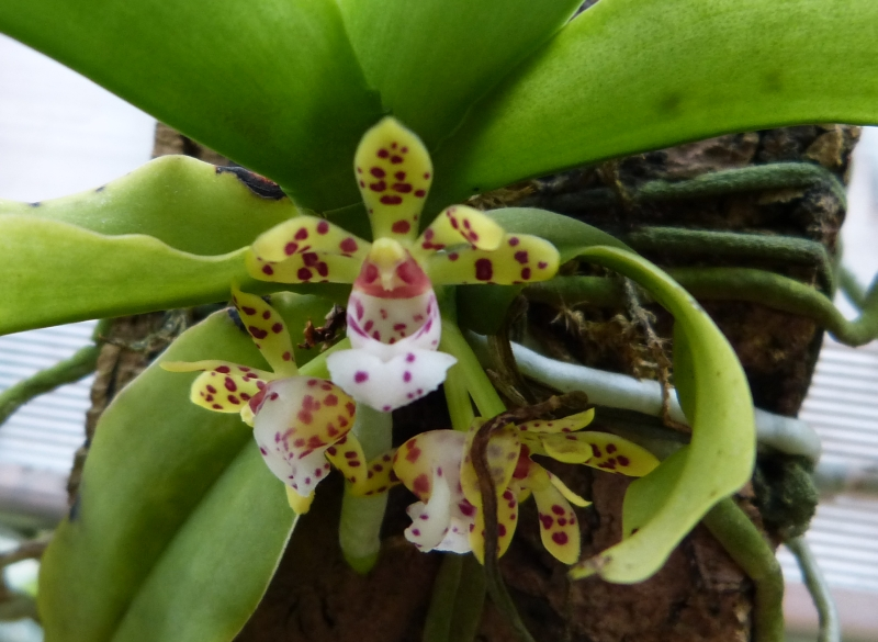 Ich war in Schwabach bei MSB Orchideen 066easju