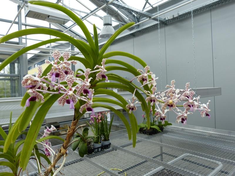 Besuch bei MSB Orchideen in Schwabach 068lxuuu