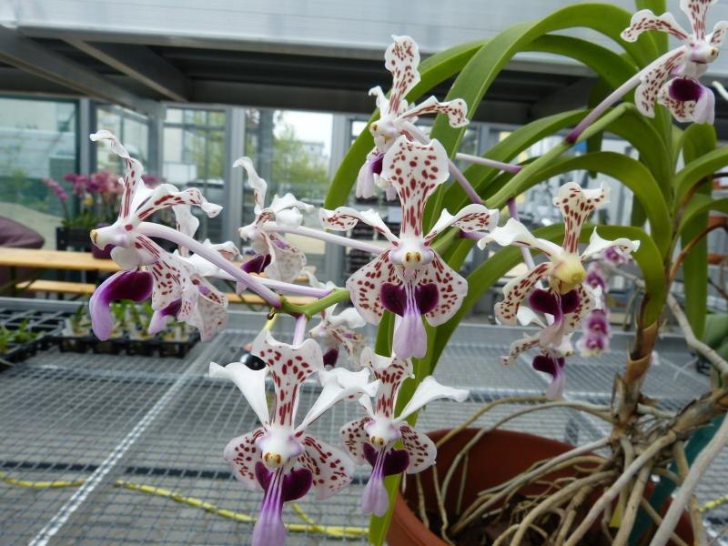 Besuch bei MSB Orchideen in Schwabach 0697ouee