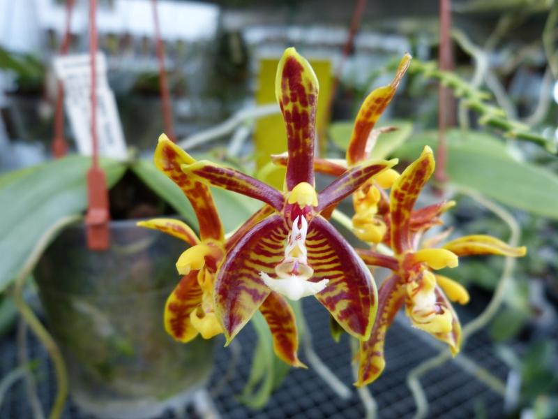 Ich war in Schwabach bei MSB Orchideen 069yqsw4