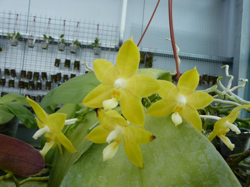 Ich war in Schwabach bei MSB Orchideen 071bosfx