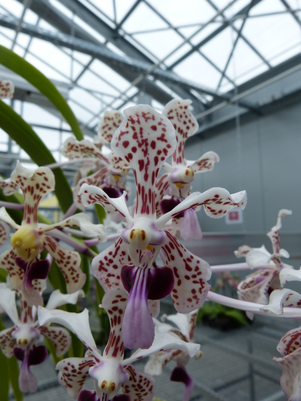 Besuch bei MSB Orchideen in Schwabach 071f2u4u
