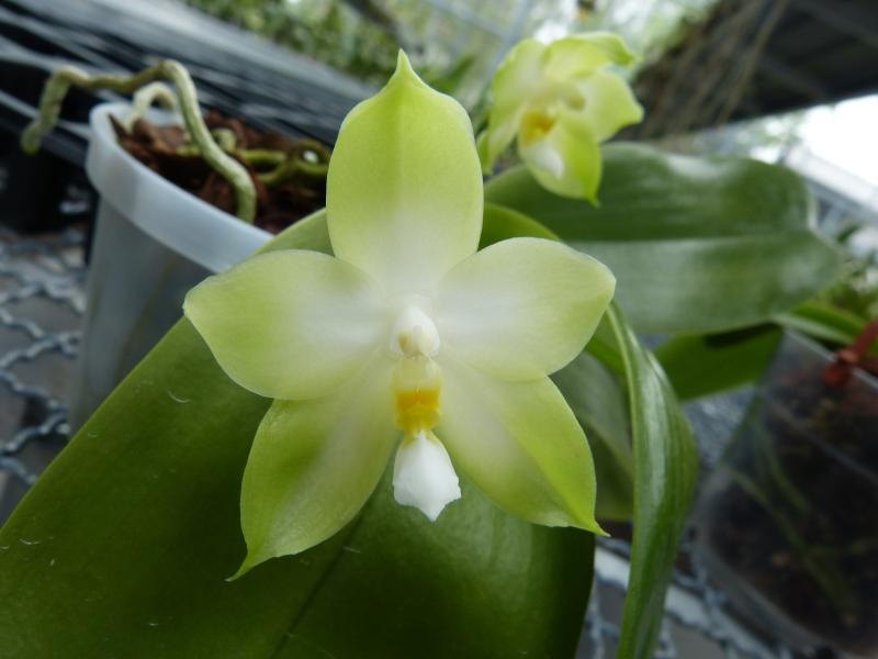 Besuch bei MSB Orchideen in Schwabach 072s3u3k