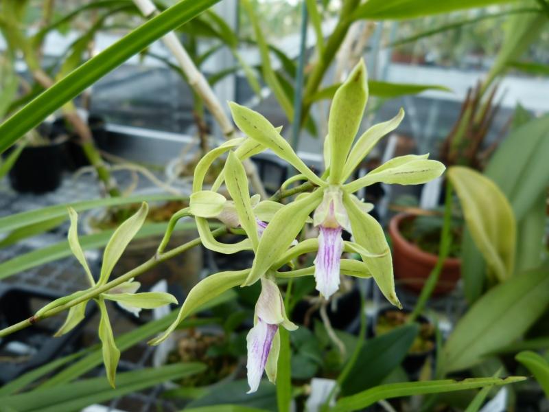 Ich war in Schwabach bei MSB Orchideen 073l1sfz
