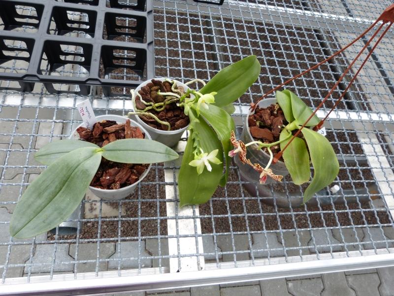 Besuch bei MSB Orchideen in Schwabach 0757hu01