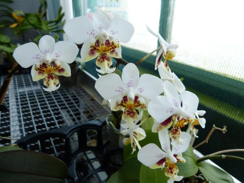 Ich war in Schwabach bei MSB Orchideen 075cnsl4