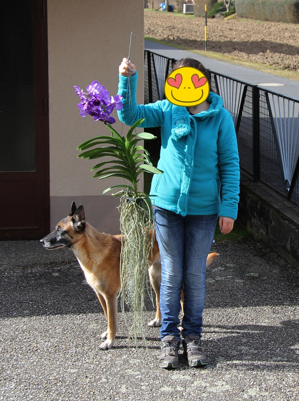 Meine Orchideen  Img_1964cyl7v