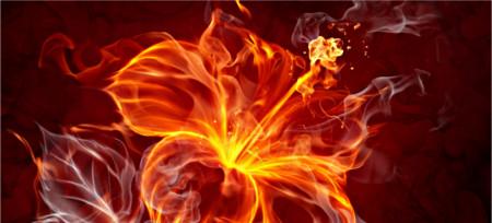 Chaske Opened-fire-flower-1995p4t