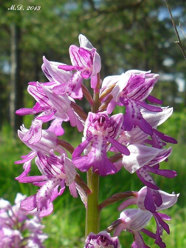 Einheimische Orchideen am Standort Orchideen-freiland052x0ua5