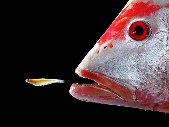 كيف تأكل الأسماك تحت الماء دون أن تختنق؟ Fish