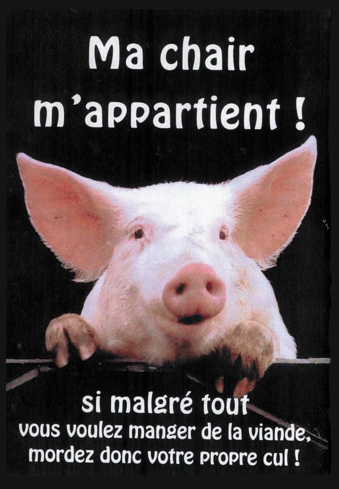 Le cochon et le dictionnaire Cochon