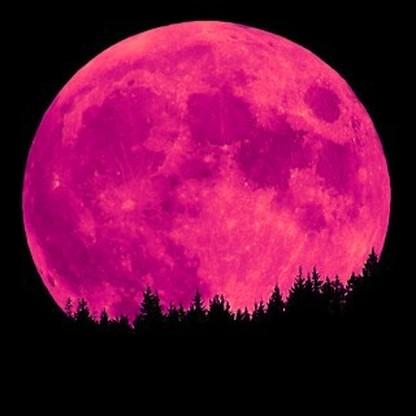 Pink Moon Rising - April's Stunning Full Moon Pink-moon