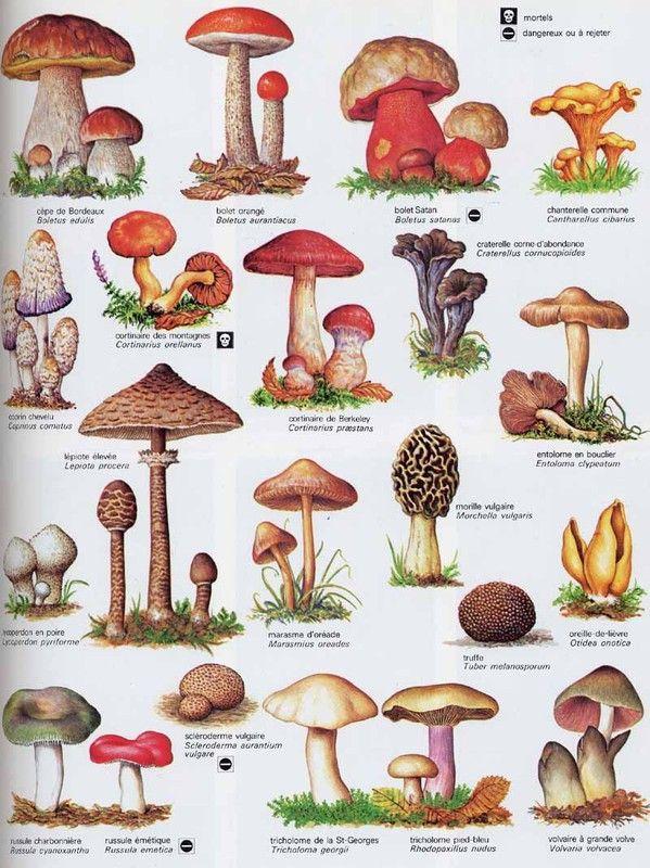 les champignons vont sortir - Page 2 962f31a0