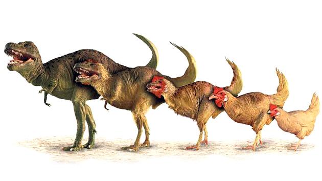 Un paleontólogo estadounidense quiere crear un dinosaurio a partir del genoma del pollo E59c9e466508b2789bf05524e55164d6_article